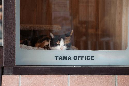 Cat - TAMA OFFICE