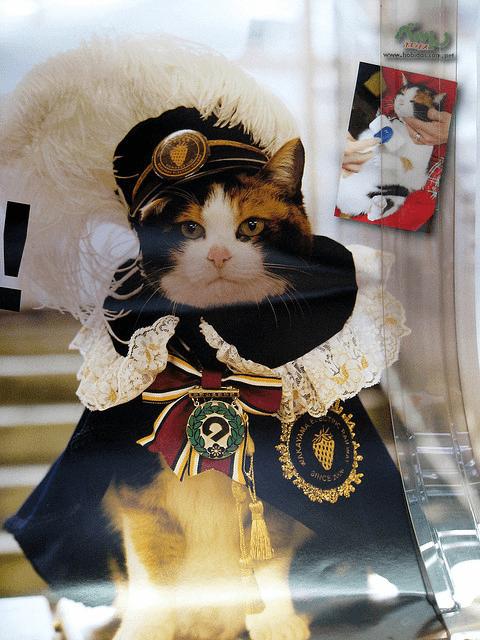 Cat - bobdascon.pet