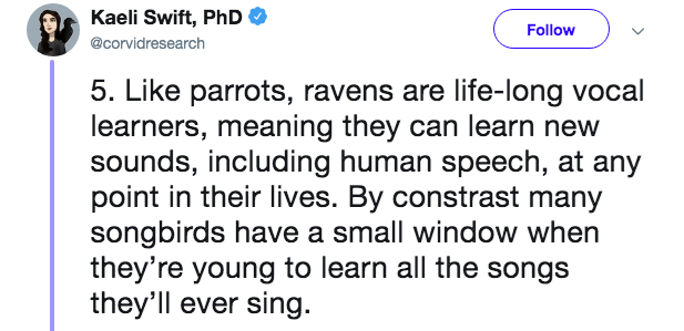 Text - Kaeli Swift, PhD Follow @corvidresearch 5. Like parrots, ravens are life-long vocal learners, meaning they can learn new sounds, including human speech, at any point in their lives. By constrast many songbirds have a small window when they're young to learn all the songs they'll ever sing