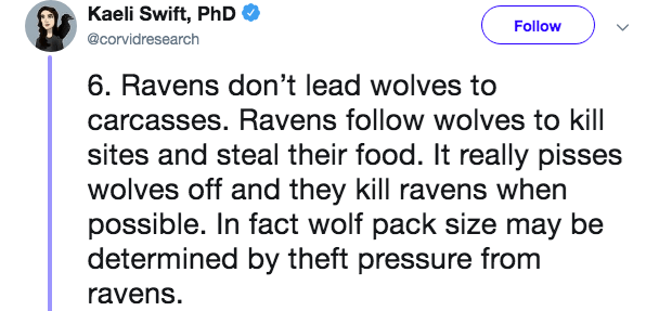 Text - Kaeli Swift, PhD Follow @corvidresearch 6. Ravens don't lead wolves to carcasses. Ravens follow wolves to kill sites and steal their food. It really pisses wolves off and they kill ravens when possible. In fact wolf pack size may be determined by theft pressure from ravens