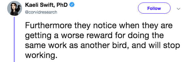 Text - Kaeli Swift, PhD Follow @corvidresearch Furthermore they notice when they are getting a worse reward for doing the same work as another bird, and will stop working.