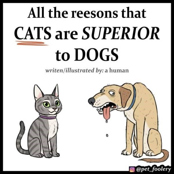 cat comics as to why cats are superior than dogs - Cartoon - All the reesons that CATS are SUPERIOR to DOGS writen/illustrated by: a human AO @pet foolery