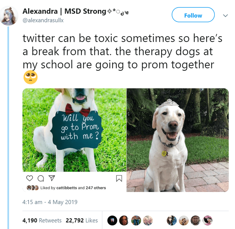 Dog breed - Alexandra | MSD Strong Follow @alexandrasullx twitter can be toxic sometimes so here's a break from that. the therapy dogs at my school are going to prom together Will you to Prom go with me? Liked by cattibbetts and 247 others 4:15 am - 4 May 2019 4,190 Retweets 22,792 Likes
