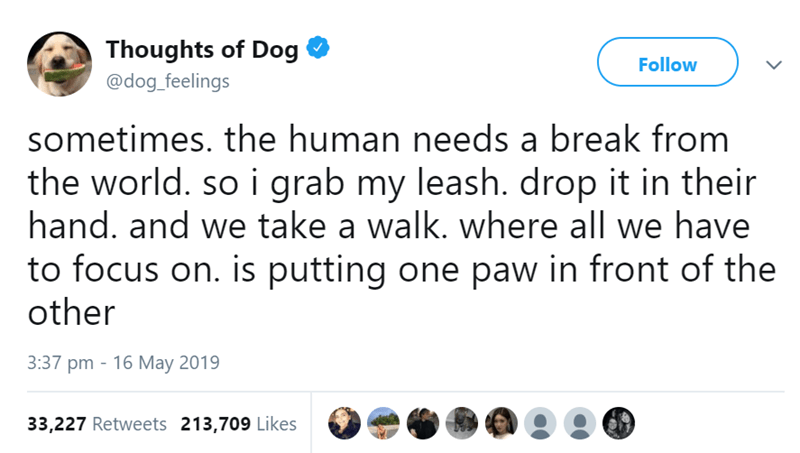 Text - Thoughts of Dog @dog feelings Follow sometimes. the human needs a break from the world. so i grab my leash. drop it in their hand. and we take a walk. where all we have to focus on. is putting one paw in front of the other 3:37 pm 16 May 2019 33,227 Retweets 213,709 Likes