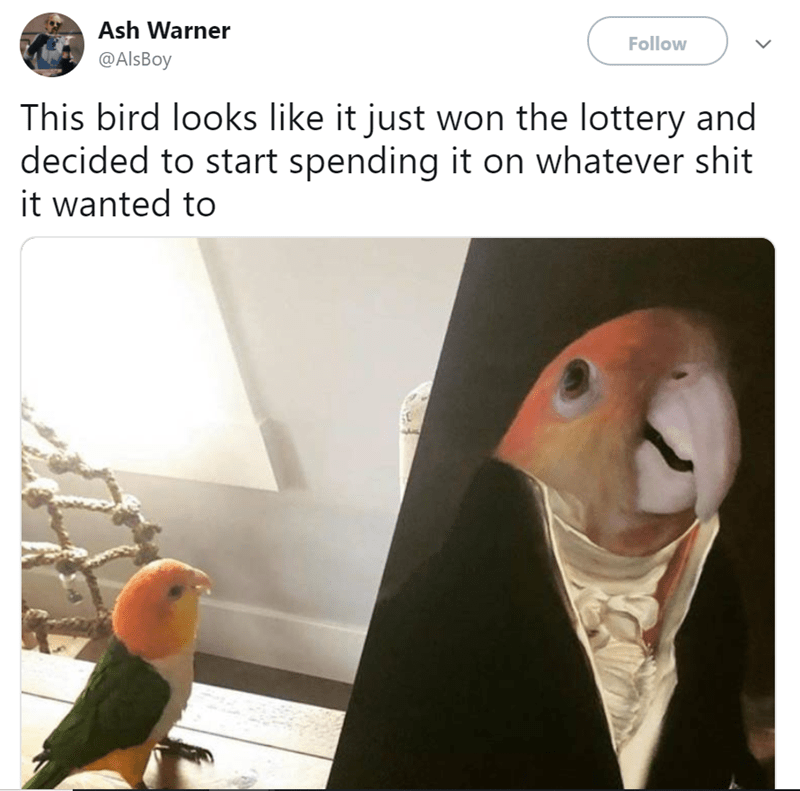 Bird - Ash Warner Follow @AlsBoy This bird looks like it just won the lottery and decided to start spending it on whatever shit it wanted to