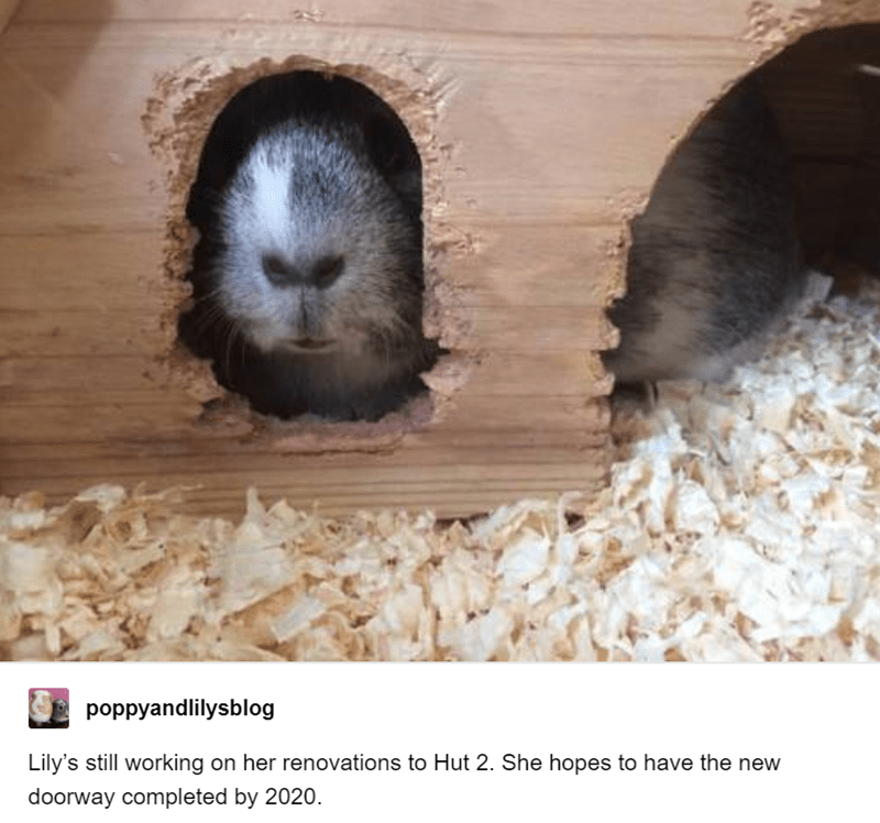 Gerbil - poppyandlilysblog Lily's still working on her renovations to Hut 2. She hopes to have the new doorway completed by 2020.