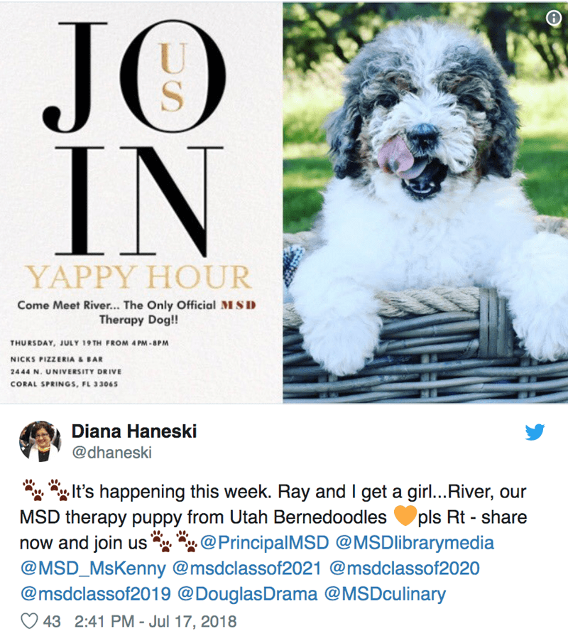 Dog - JO IN S YAPPY HOUR Come Meet River... The Only Official MSID Therapy Dog!! THURSDAY, JULY 19 TH FROM 4 PM-8PM NICKS PIZZERIA & BAR 2444 N. UNIVERSITY DRIVE CORAL SPRINGS, FL 33065 Diana Haneski @dhaneski It's happening this week. Ray and I get a girl..River, our MSD therapy puppy from Utah Bernedoodles now and join us pls Rt - share @PrincipalMSD @MSDlibrarymedia @MSD_MsKenny @msdclassof2021 @msdclassof2020 @msdclassof2019 @DouglasDrama @MSDculinary 43 2:41 PM - Jul 17, 2018