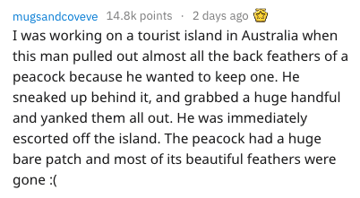 dumb tourist - Text - mugsandcoveve 14.8k points 2 days ago I was working on a tourist island in Australia when this man pulled out almost all the back feathers of peacock because he wanted to keep one. He sneaked up behind it, and grabbed a huge handful and yanked them all out. He was immediately escorted off the island. The peacock had a huge bare patch and most of its beautiful feathers we gone :