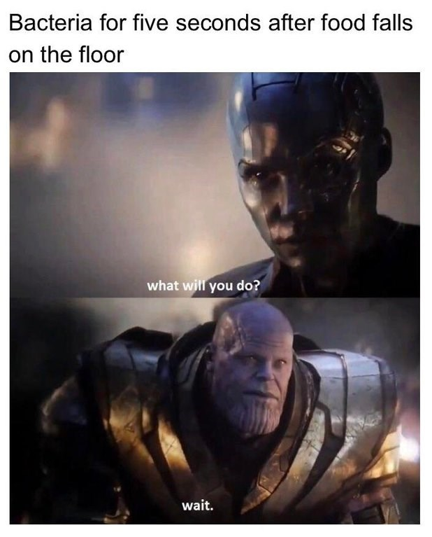 """Caption that reads, """"Bacteria for five seconds after food falls on the floor"""" above a still from 'Endgame of a character saying, """"What will you do?"""" Thanos replies, """"Wait"""""""