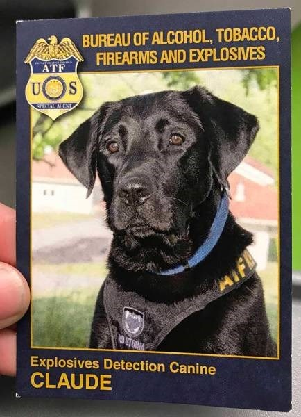Dog - BUREAU OF ALCOHOL, TOBACCO, FIREARMS AND EXPLOSIVES ATF U SPECIAL AGENT STORM Explosives Detection Canine CLAUDE