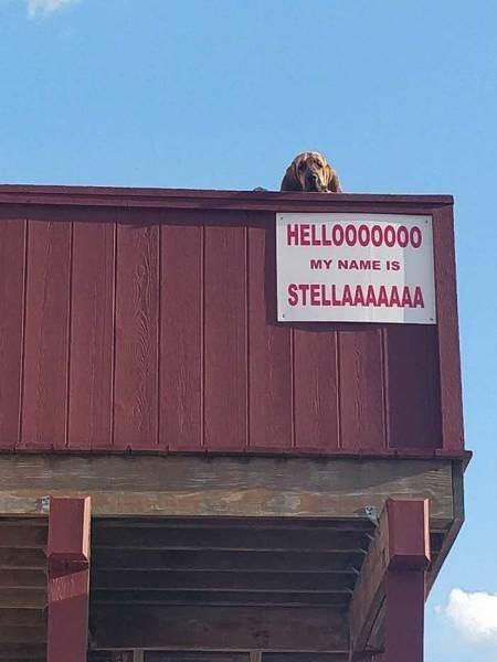 Facade - HELLOOO0000 MY NAME IS STELLAAAAAAA