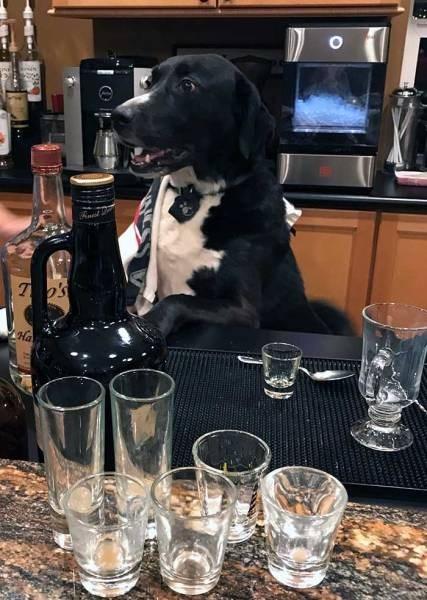 Dog - 7's Ha