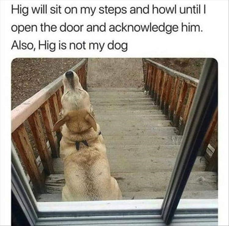 Dog - Hig will sit on my steps and howl until open the door and acknowledge him. Also, Hig is not my dog
