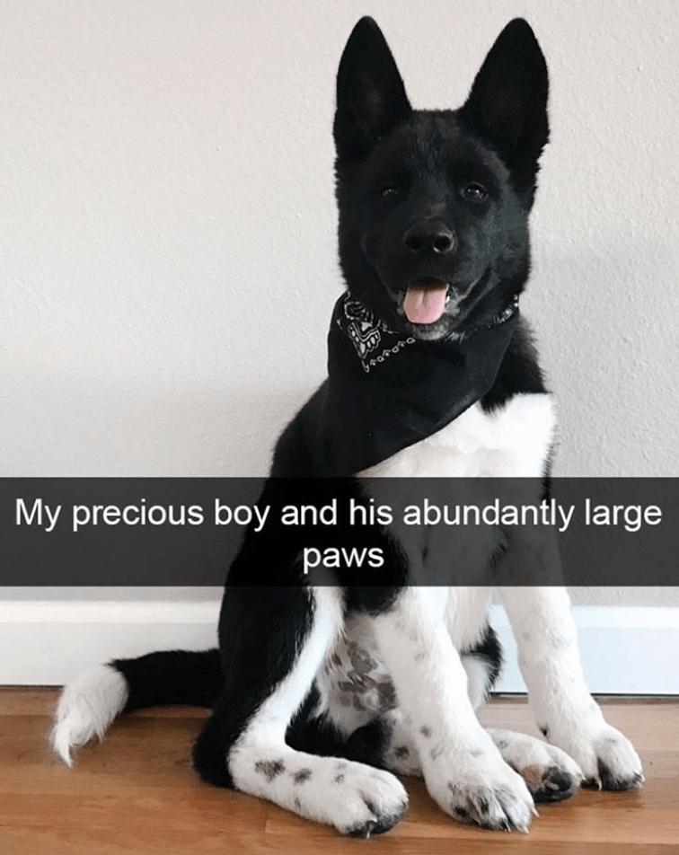 Dog - Gsarata My precious boy and his abundantly large paws