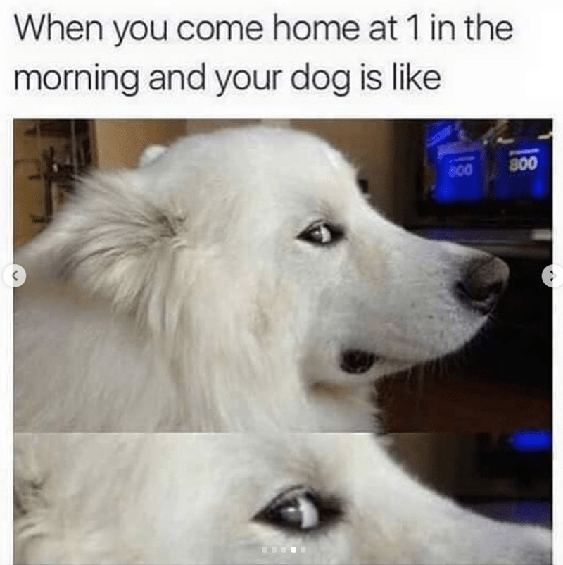 Dog - When you come home at 1 in the morning and your dog is like 800 O0