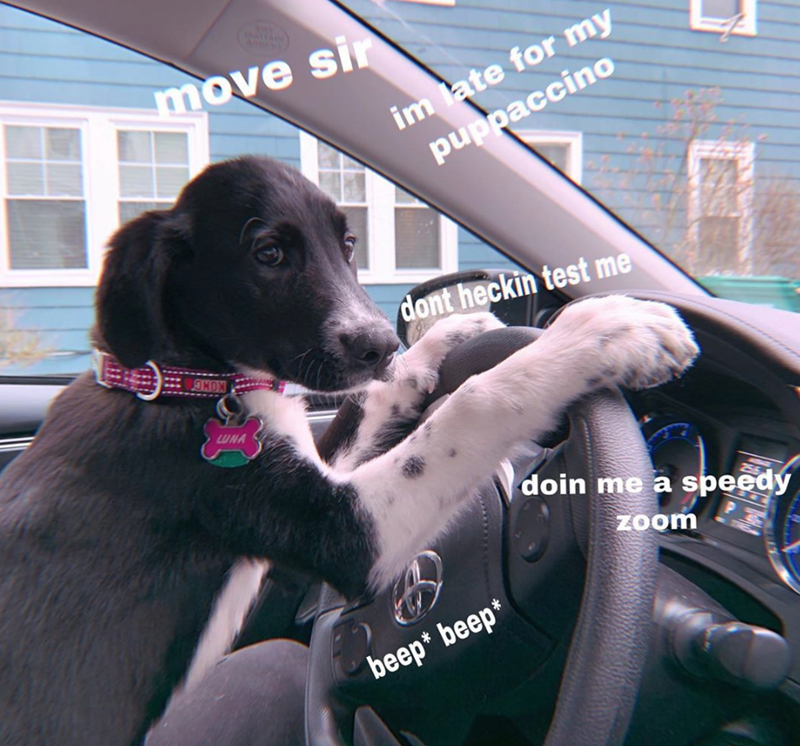 Dog - move sir im ate for my pdpaccino dont heckin test me UNA doin me a speedy zoom beep* beep*