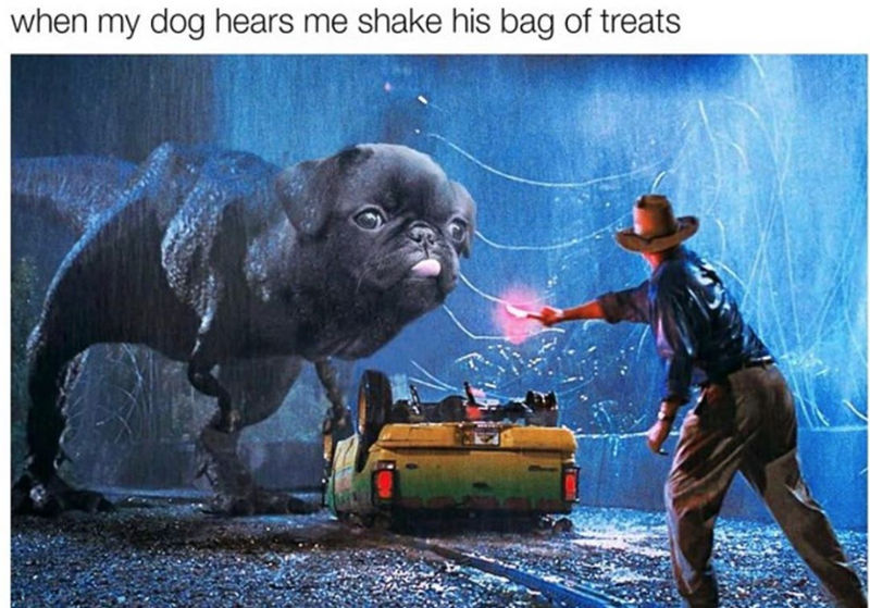 Snout - when my dog hears me shake his bag of treats
