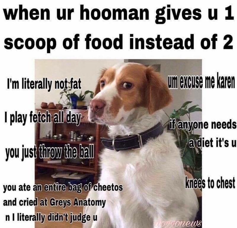 Funny meme about a fat dog