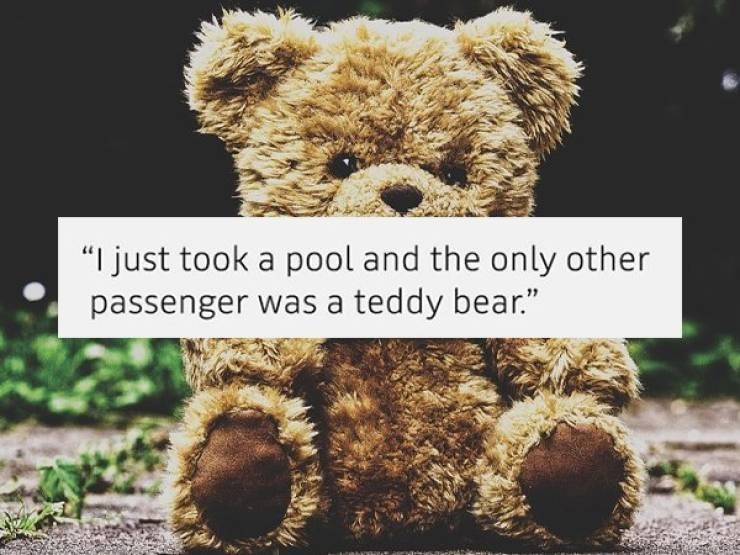"Text that reads, ""I just took a pool and the only other passenger was a teddy bear"""