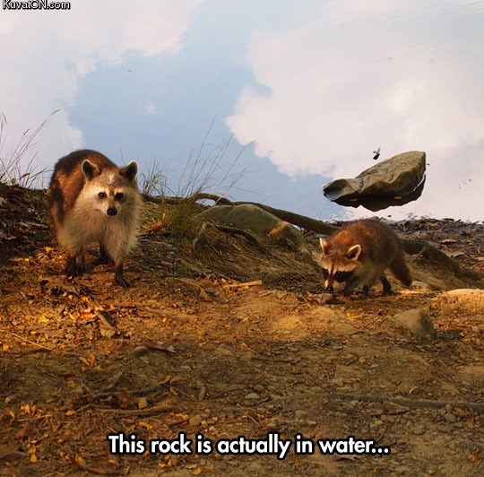 optical illusion - Wildlife - KuvaioN.com This rock is actually in wate...
