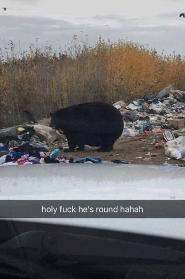 dank memes - Vehicle - holy fuck he's round hahah