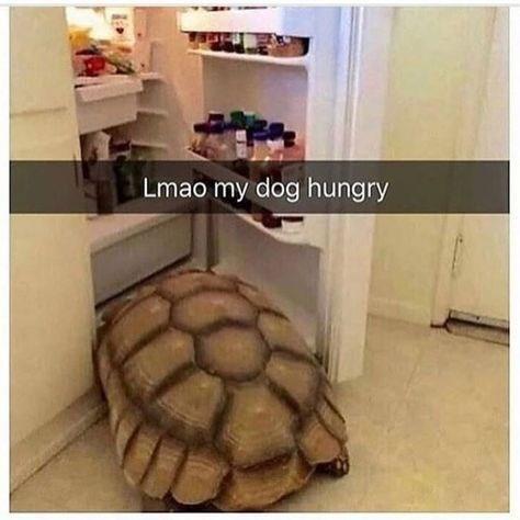 Tortoise - Lmao my dog hungry