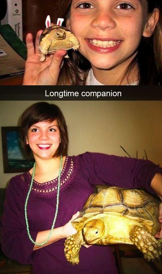 Tortoise - Longtime companion softwar Stur