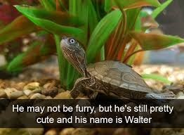 Vertebrate - He may not be furry, but he's still pretty cute and his name is Walter