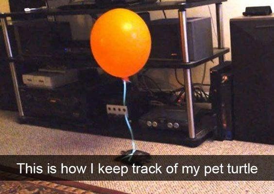 Balloon - This is how I keep track of my pet turtle