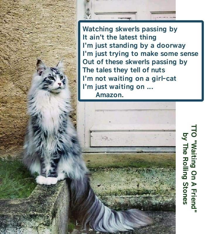 cat meme delivery amazon - 9309094144