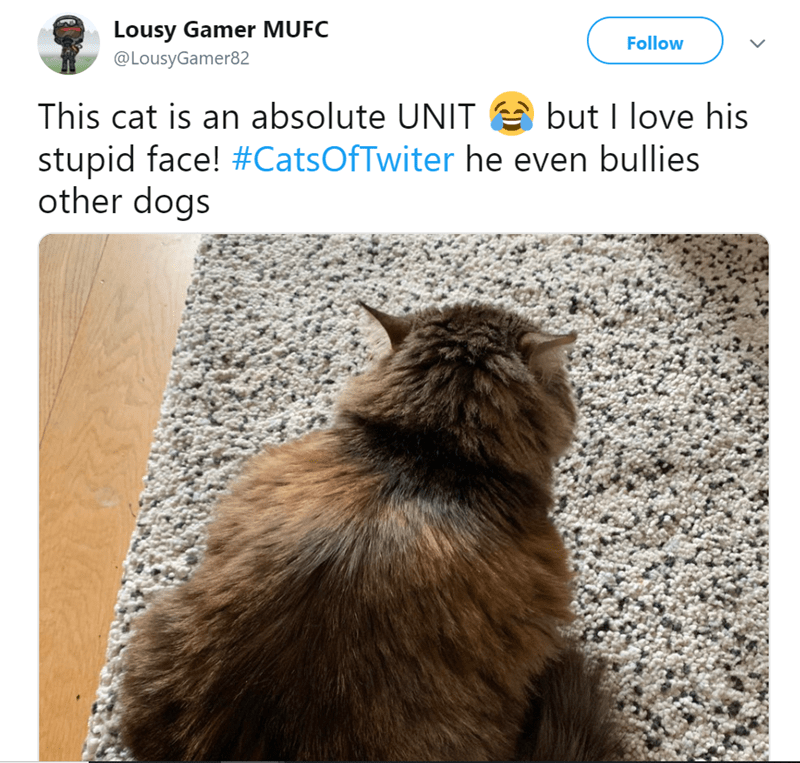 Cat - Lousy Gamer MUFC Follow @LousyGamer82 This cat is an absolute UNIT but I love his stupid face! #CatsOfTwiter he even bullies other dogs