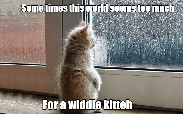 Cat - Some times this world seems too much For a widdle kitteh
