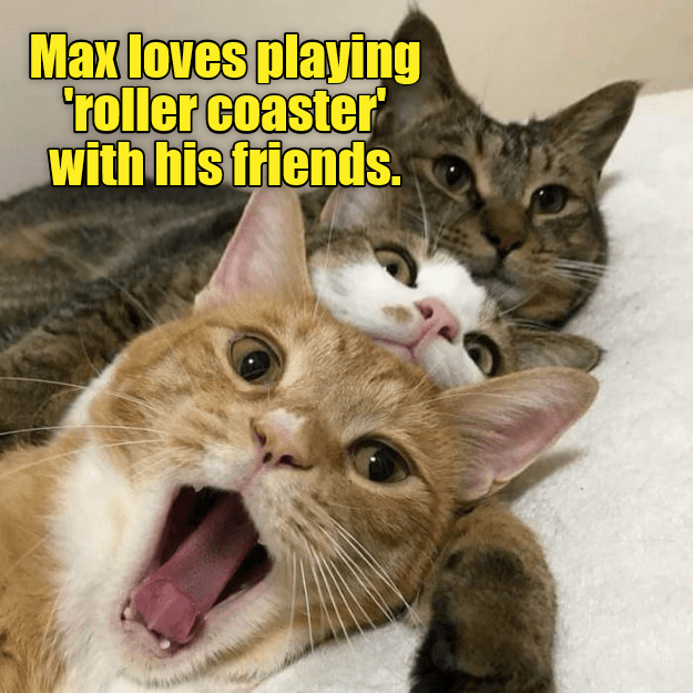 Cat - Maxloves playing roller coaster with his friends.
