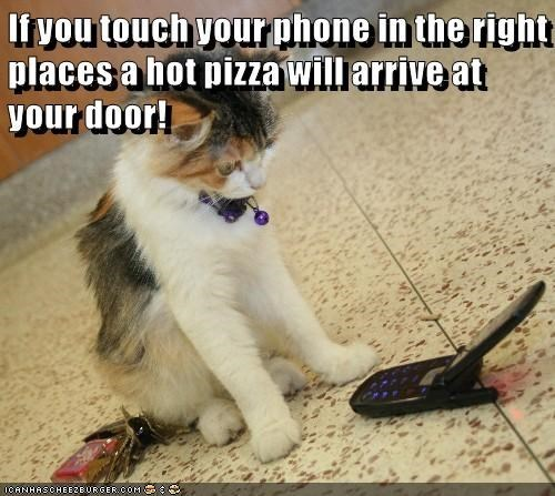 Cat - Iivou touch vourphone in the right places a hot pizza will arrive at your door! ICANHASCHEEZEURGER.COM
