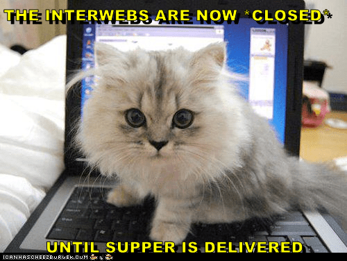 Cat - THE INTERWEBS ARE NOW CLOSED UNTIL SUPPER IS DELIVERED ICANHASCHEE2BMREMCuM Se