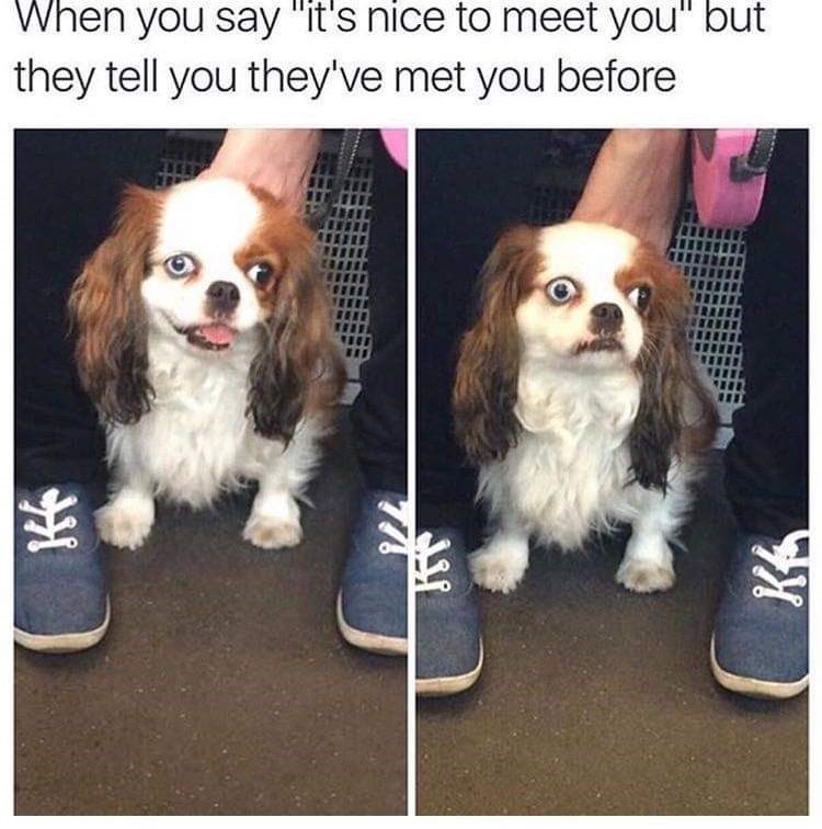 """Dog - When you say """"it's nice to meet you"""" but they tell you they've met you before"""