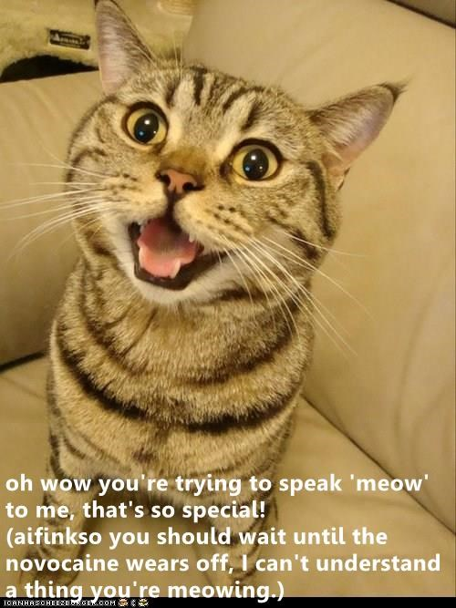 cat meme meow - 9309363712