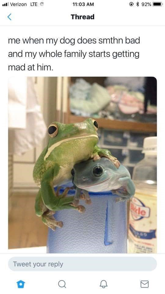 """Caption that reads, """"Me when my dog does smthn bad and my whole family starts getting mad at him"""" above a photo of a big frog hugging a little frog"""