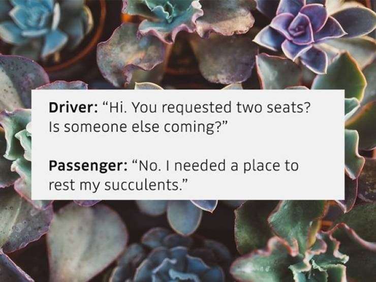 "Flower - Driver: ""Hi. You requested two seats? Is someone else coming?"" Passenger: ""No. I needed a place to rest my succulents."""