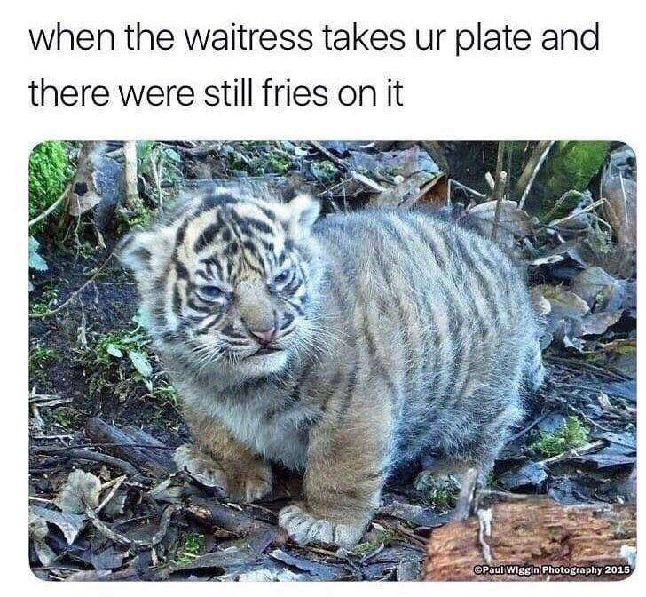 dank memes - Wildlife - when the waitress takes ur plate and there were still fries on it OPaul Wiggin Photography 2015