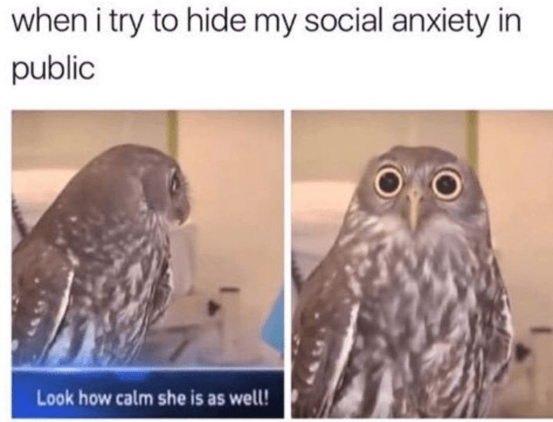 dank memes - Owl - when i try to hide my social anxiety in public Look how calm she is as well!