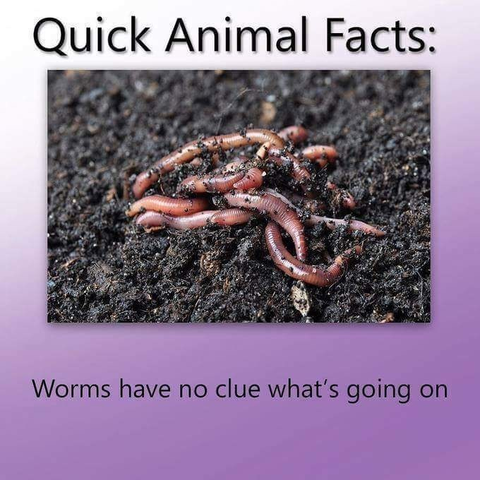 "'Quick Animal Fact' that reads, ""Worms have no clue what's going on"""