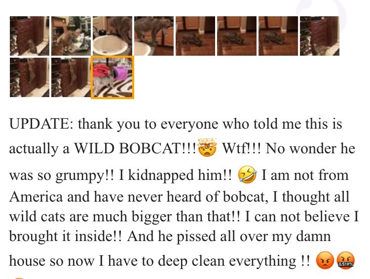 Funny Craigslist ad for a lost 'cat'