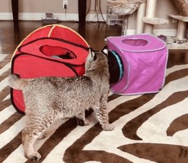 found cat - Cat