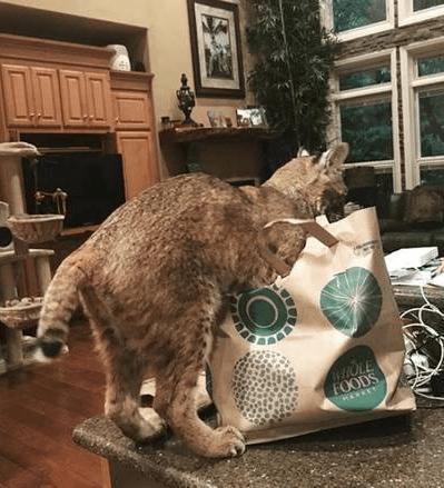 found cat - Cat - WOLE FOODS