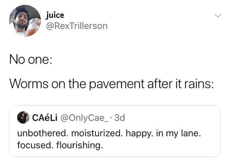 Funny meme, funny tweet about worms on the pavement after it rains.