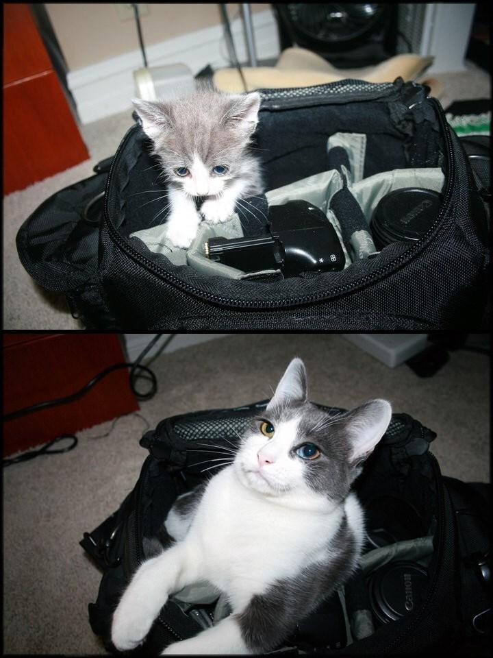 Funny classic meme - cats