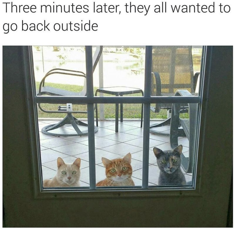 funny meme - Cat - Three minutes later, they all wanted to go back outside
