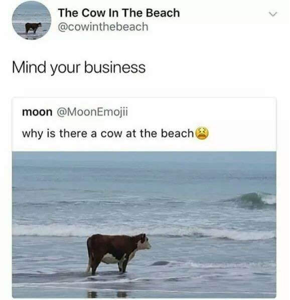 funny meme - Text - The Cow In The Beach @cowinthebeach Mind your business moon @MoonEmojii why is there a cow at the beach