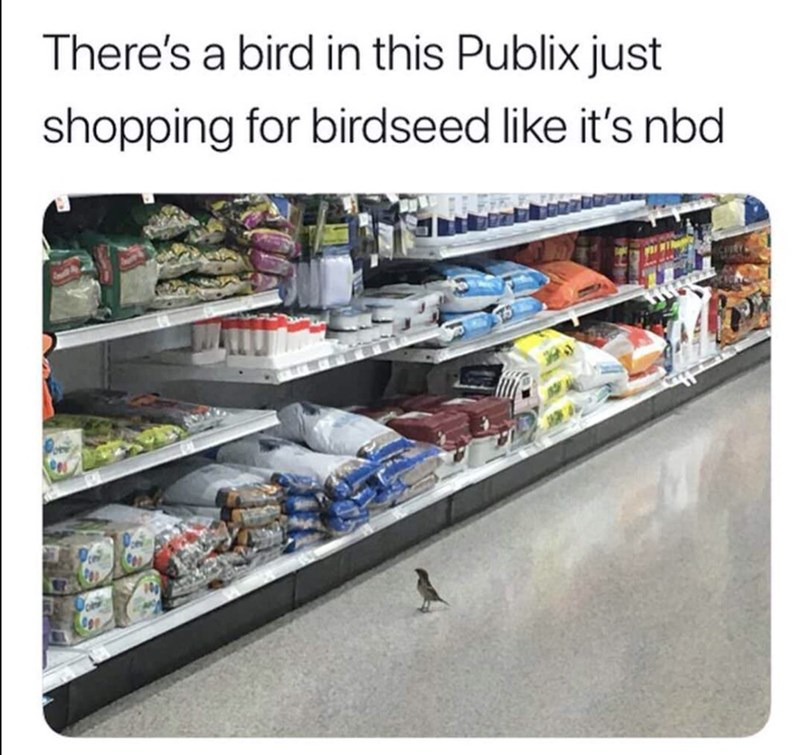 funny meme - Product - There's a bird in this Publix just shopping for birdseed like it's nbd